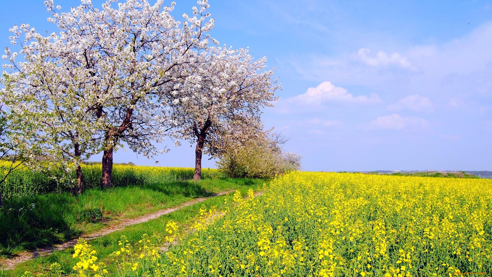 время картинки красивые природа весна и лето разглядываемый через